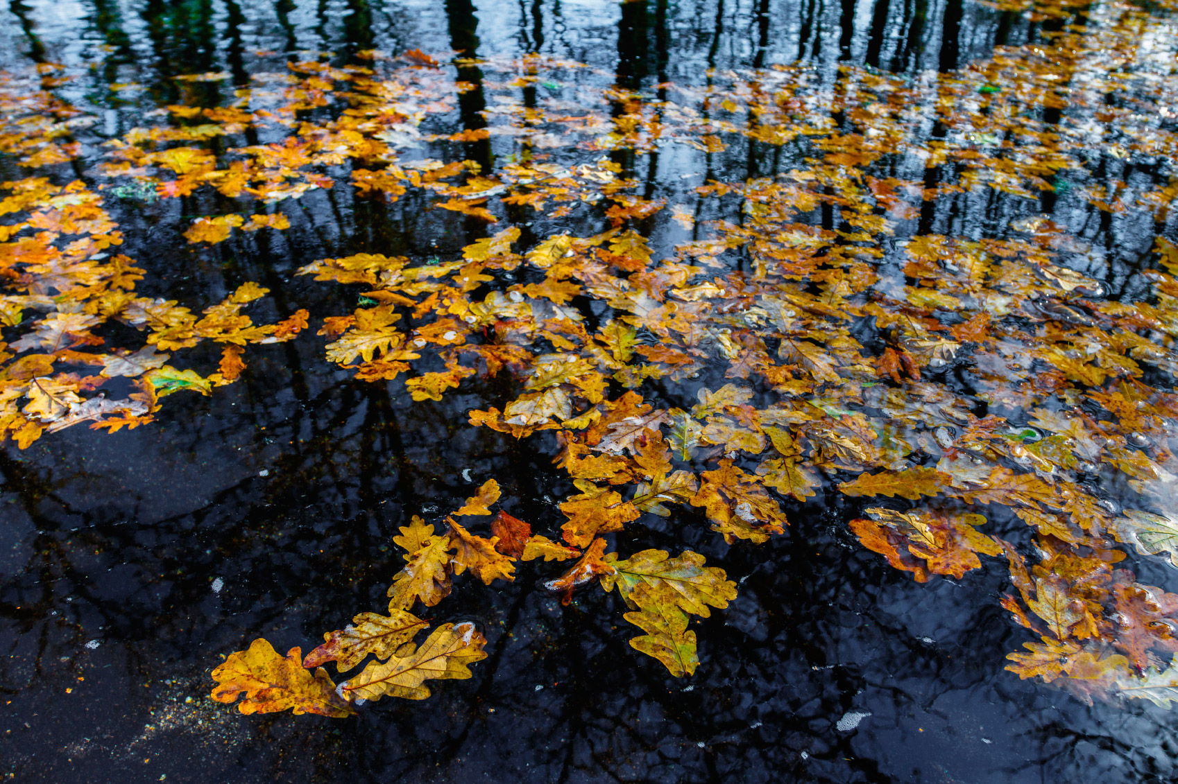 floating leaves